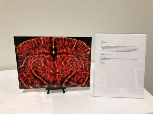 Living Mouse Brain Vasculature